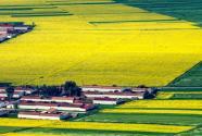 什么是未来农业?哪些是发展重点?
