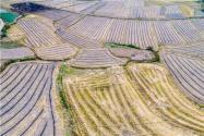 安徽51个市县遭遇严重干旱是怎么回事?会带来哪些危害?