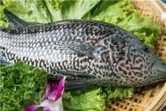 2019年深海石斑鱼多少钱一斤?它的做法是什么?