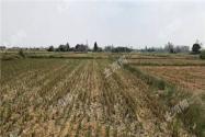 湖北荆州市荆州区560亩优质地源出租!