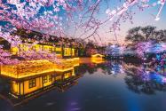 2020年国内赏樱有哪些地方?不用漂洋过海也能看!