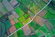 占用永久基本农田有哪些后果?修路、盖房、种树、挖塘等可以占用吗?