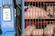 中南六省生猪禁调令生效,对养殖户、未来猪价的影响会有多大?