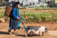 2020年农村低保补助标准是多少?将重点扶持这类人群!