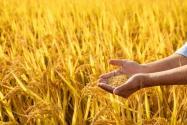 第六批农业产业化国家重点龙头大发彩票企业 名单公布!(附详细名单)