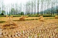 什么是耕地保护补偿激励?补偿主要有哪几种方式?