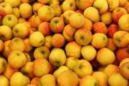 苹果是哪里的特产?2020年种植前景如何?