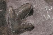 承德惊现恐龙足迹!在哪发现的?是什么恐龙?有何价值?