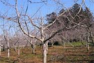 冬季果树管理要点有哪些?这六点很重要!
