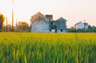 未来农村做什么最赚钱?未来将出现的这4大财富机会你得抓住!