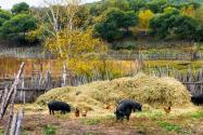 两部门:设施农业可用一般耕地,生猪养殖允许建多层建筑