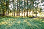 纳雍县国家储备林项目土地流转政策:流转期限是多久?流转费是多少钱一亩?