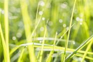 2019全年收购粮食7900亿斤!2020稻谷最低收购价政策或将继续实施