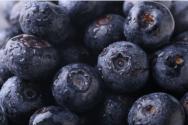 蓝莓种植要满足哪些条件?附修剪技术