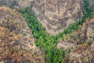 澳洲成功抢救濒临灭绝树种!是什么树?全球有多少棵?