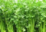 芹菜对于种植环境有什么要求?施肥方法有哪些?