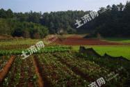 云南玉溪澄江县340亩林地39万超低价转让