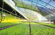 数字农业农村发展规划(2019-2025年)有哪些保障措施?符合条件的可享受补贴!