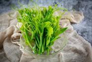 南瓜藤的别名叫什么?怎么做种植才能高产?