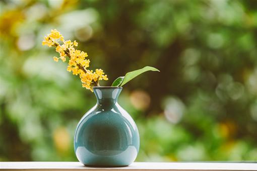 2020年种植什么花卉经济效益高?不妨试试食用花卉