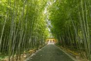 竹子有哪些常见的品种?附种植技术
