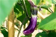 今日立春,种什么蔬菜赚钱?这4个品种正是好时机!