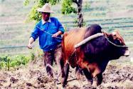 土地确权后,没有分到土地的农民怎么办?可通过这三种方式来获得土地!