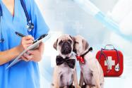 农村农业部印发《2020年兽药质量监督抽检和风险监测计划》