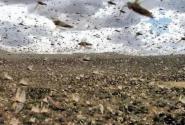 联合国呼吁关注蝗灾!目前情况如何?采取了哪些措施?