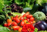 2020年种植有机蔬菜的前景怎么样?怎么种植?
