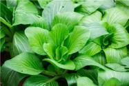 2020年春天适合种植什么蔬菜?附种植技术要点!