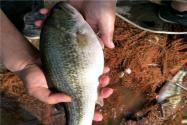 农业农村部:全面部署春季水产养殖技术指导工作