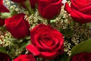 一天上百万只玫瑰被销毁!为啥被销毁?原因居然是这个!