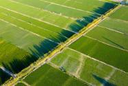 怎么确定是基本农田?与基本农田保护区有什么区别?