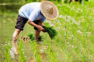 国务院部署春季农业生产:重点要做好这三点工作!