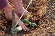 2020年家庭农场最新政策:有补贴么?补贴标准是多少?