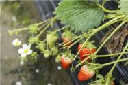 2020年春季适合种什么果树?推荐这五种!