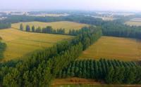 最新浙江省新增百万亩国土绿化行动方案(2020-2024年)全文