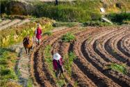 陕西:八条助农政策全面发布!确保农产品市场供应稳定
