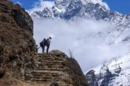 数百登山者被困喜马拉雅山是怎么回事?为什么被困?附营救措施!