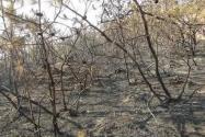上坟抽烟致百亩山林火灾是怎么回事?最后怎么处理的?附最新进展!