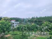 广东清远清城区170亩园地诚意转让!