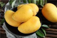 怎么种芒果?有哪些注意事项?