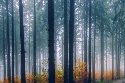 我国发现迄今最早远古森林