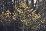 林权不动产登记怎么办理?需要登记哪些类型?附详解!