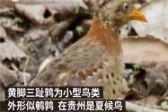 贵州山中龙吟为鸟类发出声源!具体是哪种鸟类?终于真相大白了!