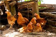 全国将逐步取消活禽市场交易!具体是怎么回事?为什么取消?有这两大原因!