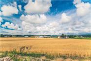 2020耕地占用税最新规定:每平方要交是多少钱?