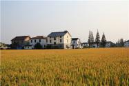 农村宅基地批复有效期是多久?批复流程是怎样的?