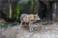 动物园内喂狼吃草女子被列黑名单!具体怎么回事?附详情!